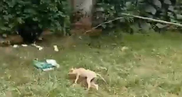 小小训犬师