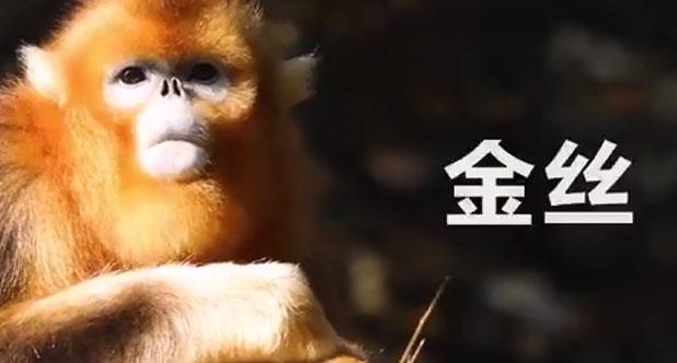韩路游记-中国国家公园巡礼01:湖北神农架国家公园(预告片)